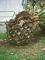 PalmeiraBenfica(detalhe1).jpg