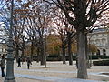 Paris 75001 Jardins du Carrousel trees in autumn 2.jpg