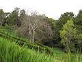 Parque Pedro del rio Zañartu (11656118825).jpg