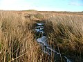 Partially frozen stream - geograph.org.uk - 638704.jpg