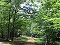 Path in Epping Forest - geograph.org.uk - 2523517.jpg