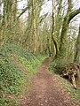 Path through the woods, Laugharne - geograph.org.uk - 469661.jpg