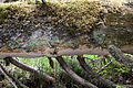 Perenniporia subacida (14671724135).jpg