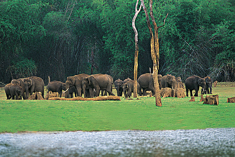 Periyar National Park, Places to visit in India in february