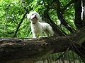 Pes stromový vetriaci korisť.JPG
