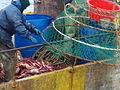 Pesca de centolla en la Bahía Ushuaia 28.JPG