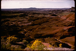 Petrified Forest National Park PEFO2956.jpg
