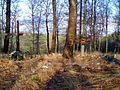 Pfalz Bodfeld.jpg