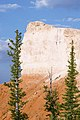 Picea pungens Bryce Canyon NP 1.jpg