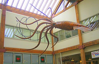 Giant squid in popular culture giant squids depicted in popular culture