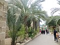 PikiWiki Israel 32632 Religion in Palestine.jpg