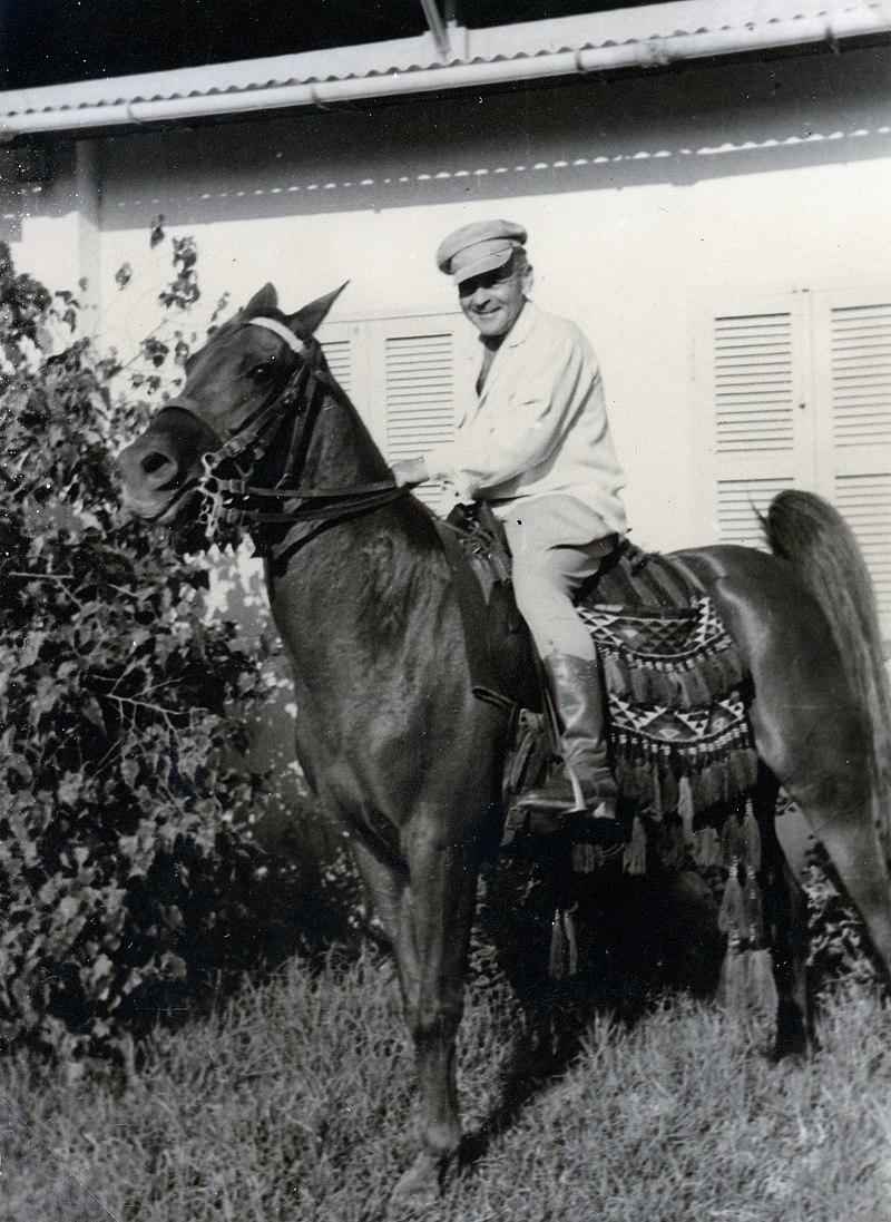 פרש על סוסה ערבית