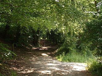Pilgrims' Way - Pilgrims' Way near Westwell, Kent