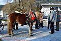 Pinzgauer Brauchtums- und Trachtenschlittenfest 23 2. Februar 2014 02.jpg
