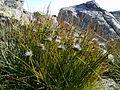 Plants of Rila.jpg