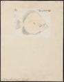 Platax orbicularis - 1700-1880 - Print - Iconographia Zoologica - Special Collections University of Amsterdam - UBA01 IZ13500491.tif