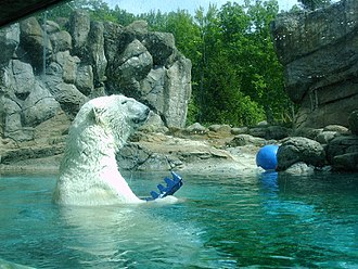 North Carolina Zoo - A polar bear and its enclosure in the North America section of the zoo.