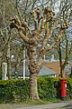 Pollarded tree and postbox, The Square, Penryn (6896362500).jpg
