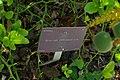 Poncirus trifoliatus, Conservatoire botanique national de Brest 01.jpg