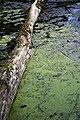Porter Lake Trail, Forest Park, Springfield, Massachusetts - panoramio (1).jpg