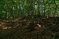 Prírodná rezervácia Jedlinka, CHKO Vihorlat (05).jpg