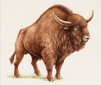 Steppe bison - Restoration