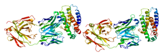 Thrombopoietin protein-coding gene in the species Homo sapiens
