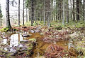 Puddle in forest2.jpg