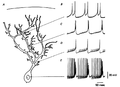 Purkinje cell dendritic spike.png