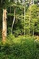 Puszcza białowieska fragmenty rezerwatu ścisłego a4.JPG