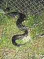 Python199.jpg