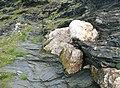 Quartz on the cliff, Boscastle - geograph.org.uk - 1325045.jpg