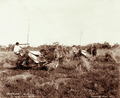 Queensland State Archives 3930 Harvesting wheat with horse drawn reapers and binders Canning Downs near Warwick 16 November 1894.png