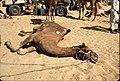 Rajasthan, India (27637376493).jpg