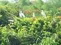 Ranganthittu Bird Sanctuary 5.jpg