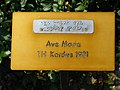 Rapperswil - Duftrosengarten Ave Maria TH Kordes 1981 2010-07-03 16-32.JPG