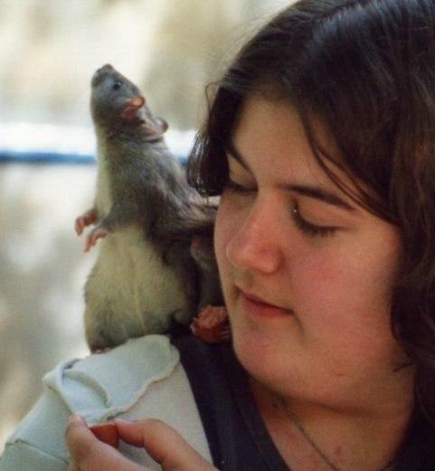 Rat shoulder