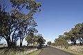 Rawsonville NSW 2830, Australia - panoramio (3).jpg