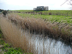 Reen and viewing platform, Newport Wetlands.jpg
