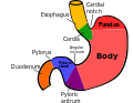 Regions of stomach.svg