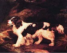 A painting of a dark brown and white dog with a heavy coat. It has heavy feathering on the tail and legs, and its tongue is out.