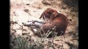 File:Reisevideo Indien (1982) - im Original auf Super 8.webm
