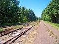 Remaining tracks of abandoned PEI Railway. (7483044052).jpg