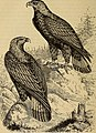 Reptiles and birds. A popular account of the various orders; with a description of the habits and economy of the most interesting. (1873) (14769609213).jpg