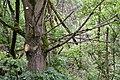 Rheinland-Pfalz, Ludwigshafen am Rhein, Landschaftsschutzgebiet 07-LSG-7314-013, Bruchlandschaft 005.jpg