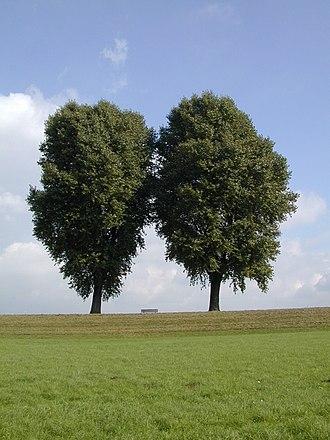 Düsseldorf-Golzheim - Trees in Rheinpark Golzheim taken October 13, 2005