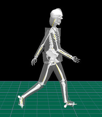 Rigid body dynamics - Human body modelled as a system of rigid bodies of geometrical solids. Representative bones were added for better visualization of the walking person.