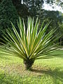 Rio de Janeiro Botanical Garden 5.JPG