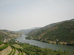 The vineyards that produce Port wine are common along the hillsides that flank the valley of the River Douro in northern Portugal