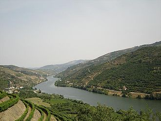 Port wine - The vineyards that produce port wine are common along the hillsides that flank the valley of the River Douro in northern Portugal.